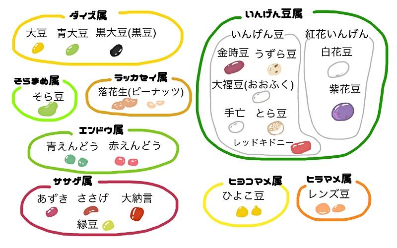豆の種類と属性一覧